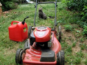 Cat staring at a lawn mower and jerry can